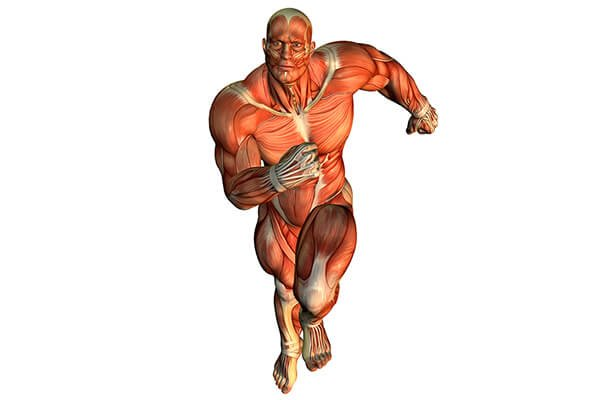 IMAGE - Muscle Man