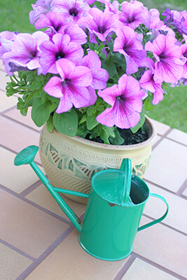 IMAGE - Watering Can