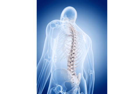 IMAGE: The Spine