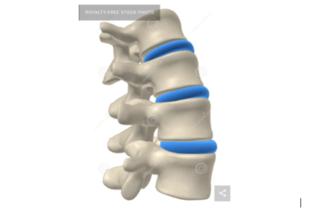 IMAGE: Structure of spinal disc