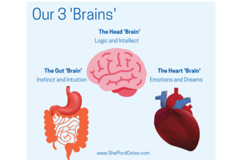 Our three brains